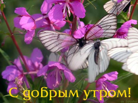 674011_utro23.jpg (467x350, 46Kb)