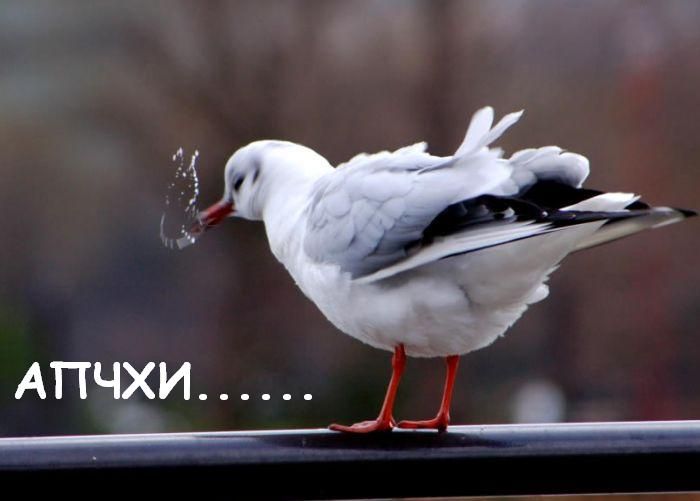 www_bibka_ru_2006031101280.jpg (700x501, 30Kb)