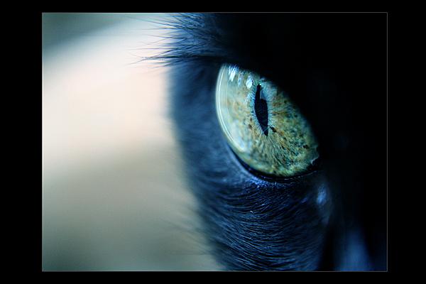 Through_her_eyes___by_larafairie.jpg (600x400, 183Kb)
