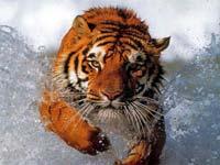 animals_5_small.jpg (200x150, 7Kb)