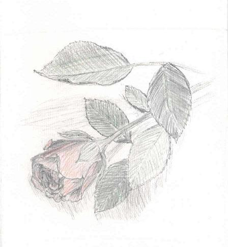 roza moya.JPG (448x485, 25Kb)