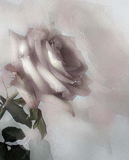 roza.jpg (443x550, 26Kb)