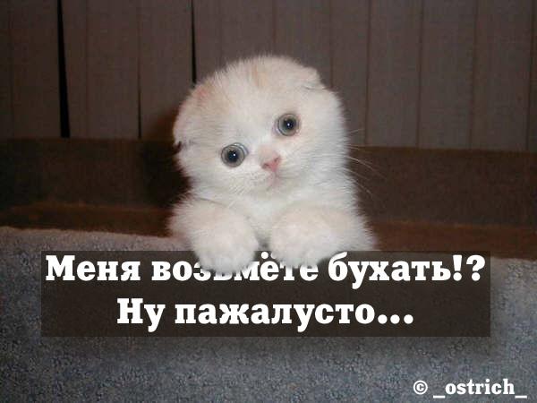 6591613_3726439_MenyaVozmete_Buhat.jpeg (600x450, 102Kb)