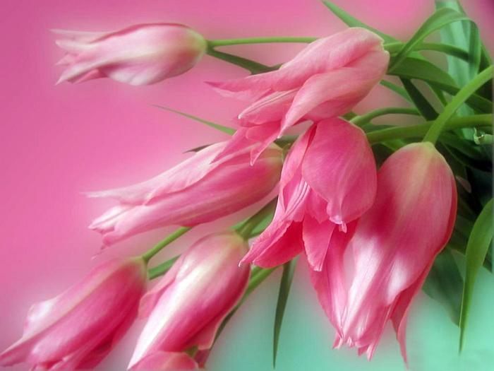 flowerbig19.jpeg (700x525, 132Kb)
