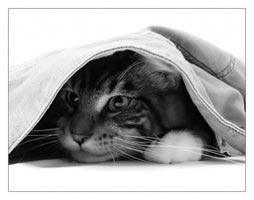cat.jpg (254x200, 11Kb)