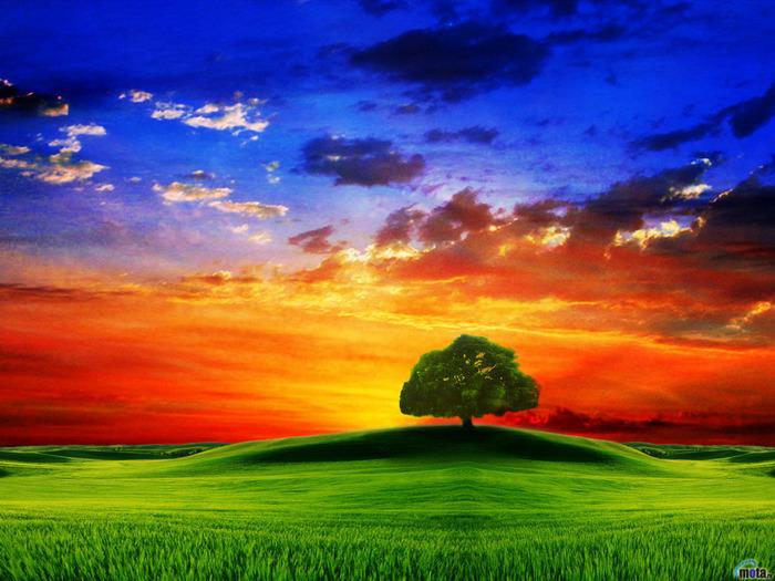nature.jpg (700x525, 174Kb)
