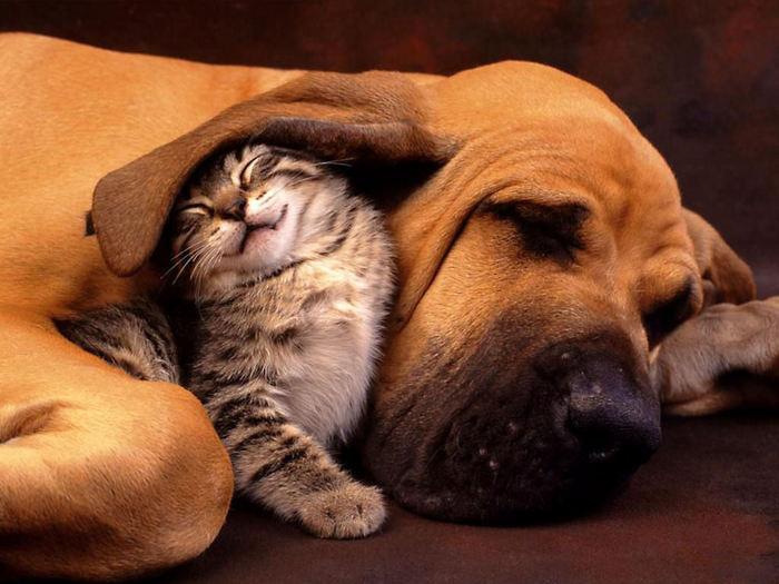 Ушастый песик и котенок.jpg (700x525, 68Kb)