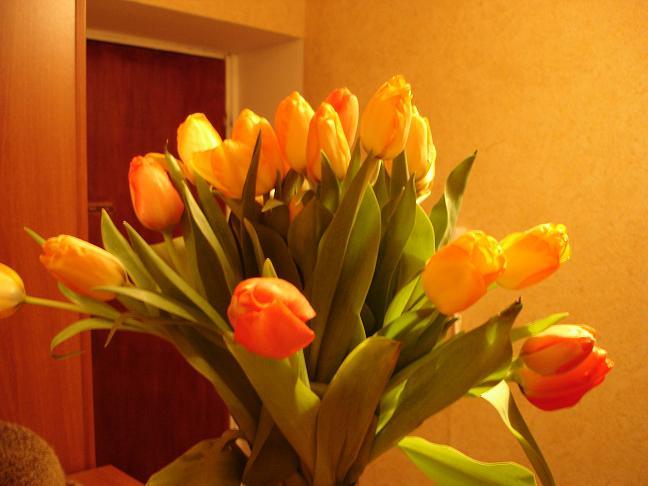 tulip.JPG (648x486, 36Kb)