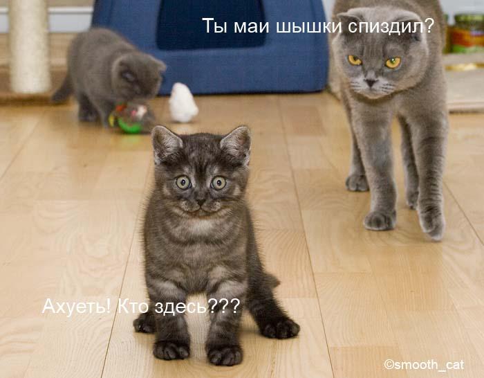 cats.jpg (700x546, 63Kb)