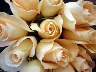 Розы.jpg (400x300, 21Kb)