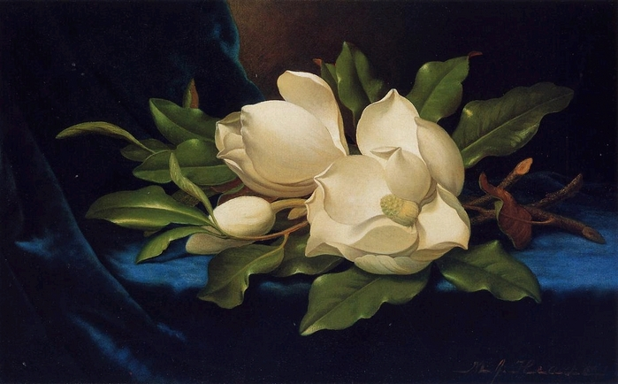 Giant Magnolias on a Blue Velvet Cloth - (Martin Johnson Heade - circa 1885-1895.jpg (699x434, 206Kb)