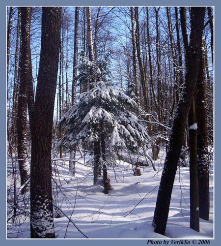 В лесу родилась елочка ....jpg (450x500, 159Kb)