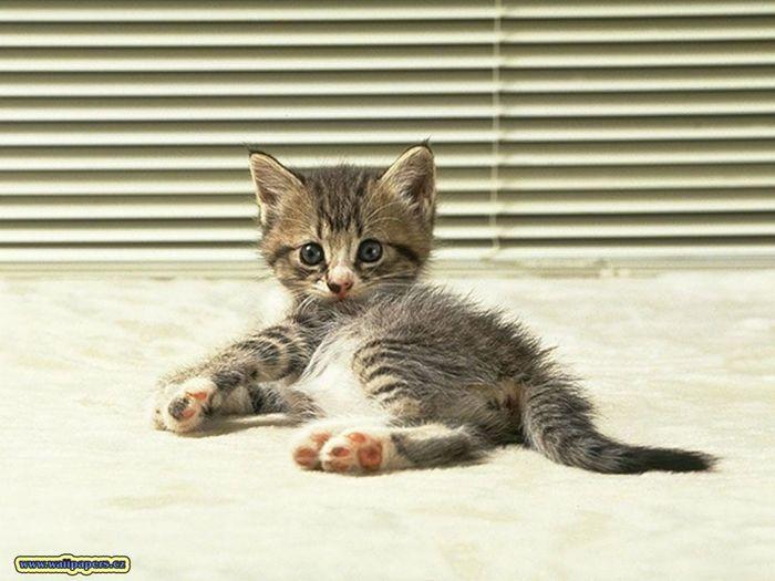 cat_29.jpg (700x525, 53Kb)