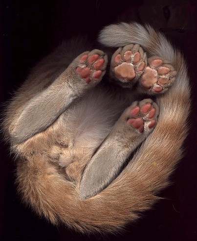 скан кошки.jpg (403x492, 59Kb)