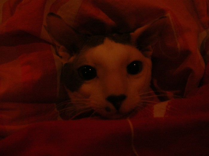 Сонный кот.JPG (699x523, 46Kb)