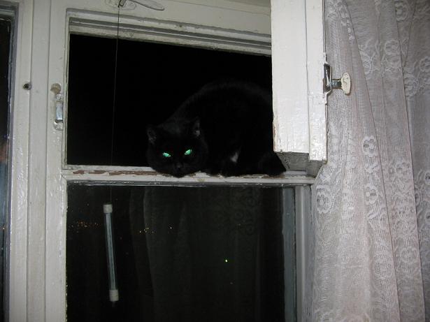 аццкая кошка.JPG (615x461, 34Kb)