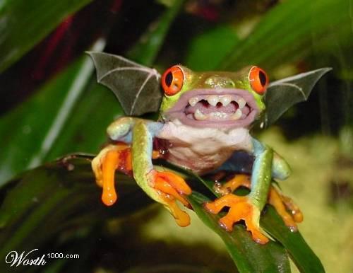 52_frog_24325.jpg (500x386, 23Kb)