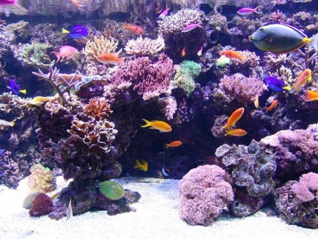 aquarium_07-ziza.jpg (640x480, 133Kb)
