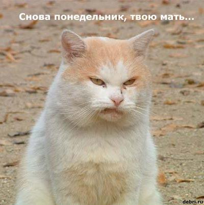 www_bibka_ru_2005120200820.jpg (400x403, 24Kb)