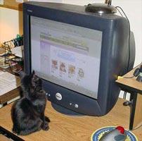 cat.jpg (202x200, 10Kb)