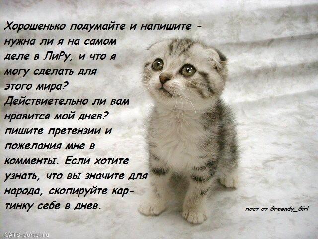 Cat.jpg (640x480, 82Kb)