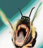 nektar.jpg (150x166, 30Kb)
