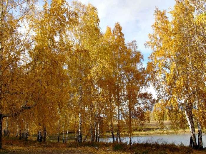 http://img.liveinternet.ru/images/attach/3/15783/15783387_osen_3.jpg