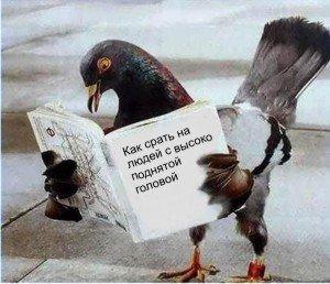 http://img.liveinternet.ru/images/attach/3/16757/16757885_golub.jpg