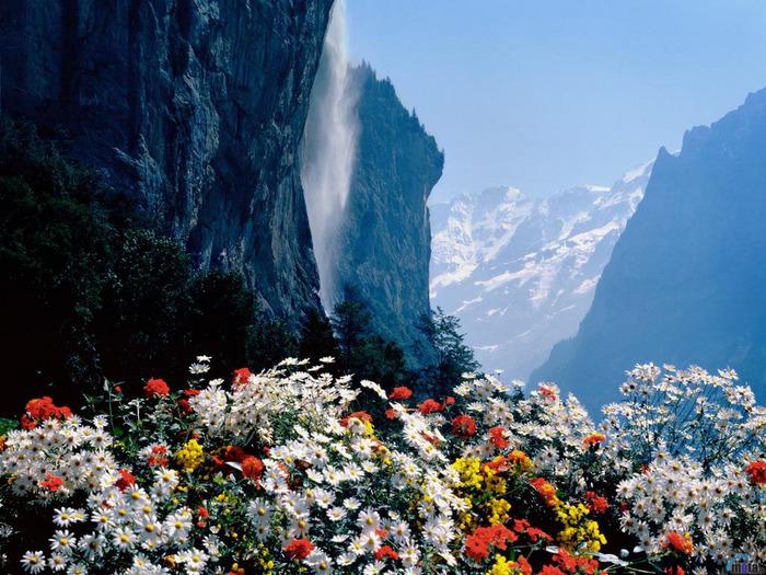 7074997_flowers_262.jpeg (700x525, 205Kb)