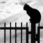 327659_cat_and_sky.jpg (150x150, 22Kb)