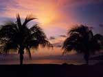 пальмы.jpg (150x113, 5Kb)