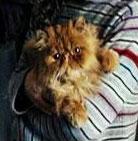 cat3 (138x141, 7Kb)