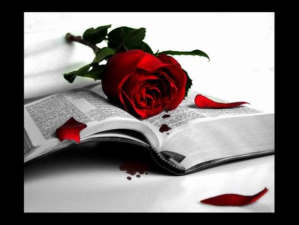 Книга и роза (614x461, 38Kb)