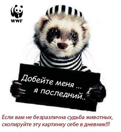 7313502_7294522_Esli_vam_doroga_sudba_zhivotnuyh (460x500, 36Kb)