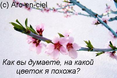 7068113_7067024_8_marta (400x267, 33Kb)