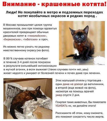 крашеные котята (450x508, 72Kb)