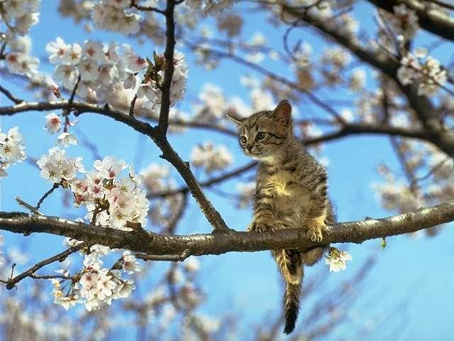 cat_0038 (640x480, 42Kb)