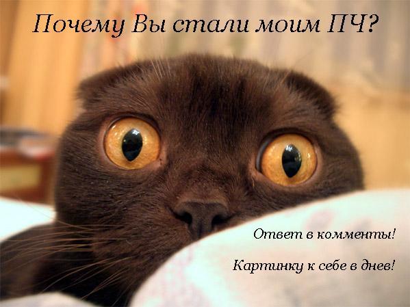 cat (599x449, 39Kb)