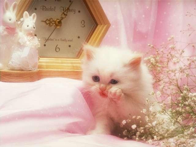 cat_0149 (640x480, 25Kb)
