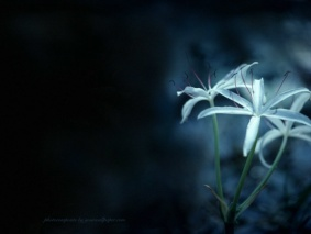 cvety (283x213, 13Kb)