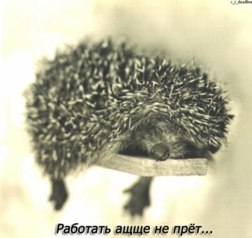 http://img.liveinternet.ru/images/attach/4/10681/10681402__0527_ezcopy.jpg