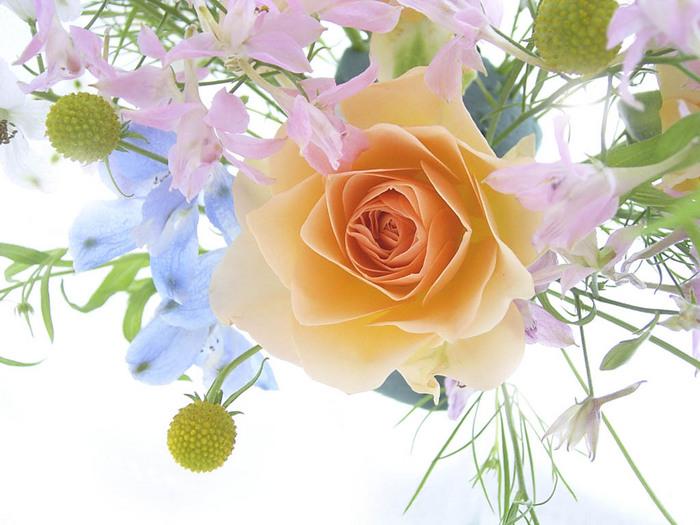 http://img.liveinternet.ru/images/attach/4/10902/10902773_1801_05.jpg