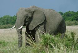 10 смертельно опасных животных топ