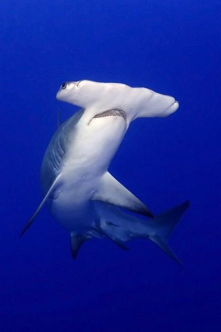 Великолепный подводный мир (36 фото).  Как прекрасен этот мир (38 фото)