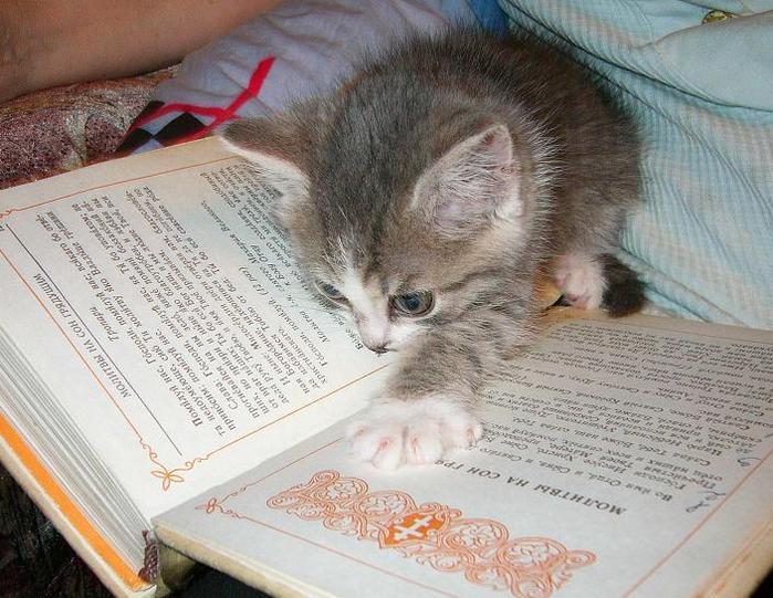 Читать не вредно, вредно не читать