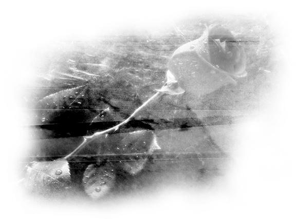 http://img.liveinternet.ru/images/attach/4/19729/19729269_3.jpg